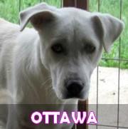 Les adultes de taille moyenne en Roumanie en un clin d'oeil Ottawa17