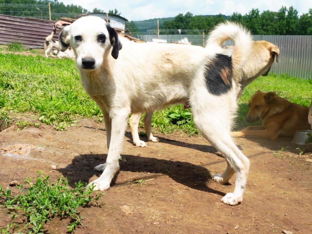 PABLO - mâle croisé de taille moyenne à grande adulte, né en septembre 2017 - REMEMBER ME LAND Pablo_21