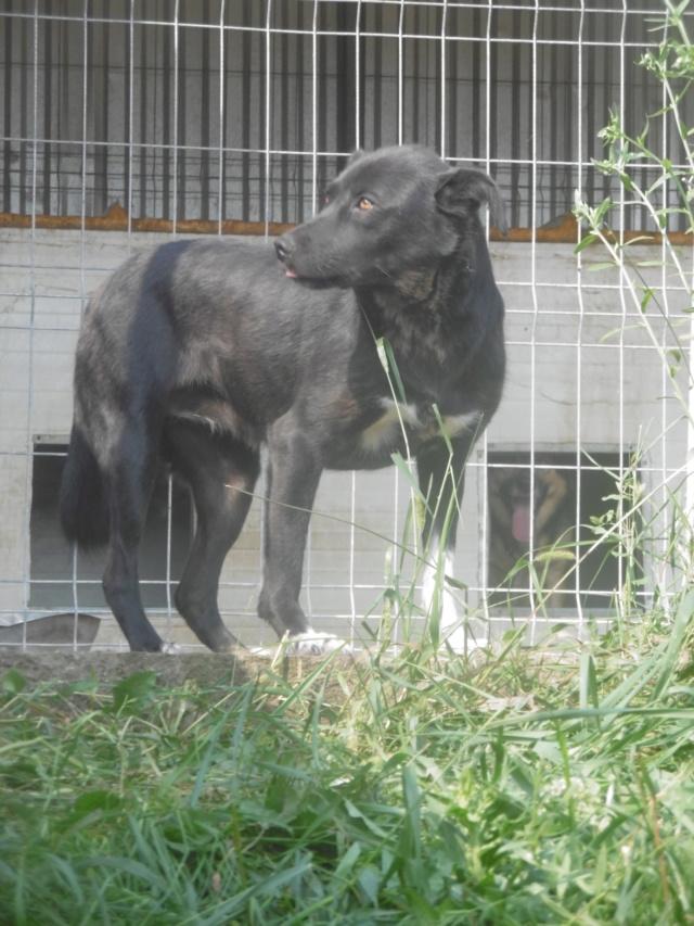 PACIFIC - femelle, croisée de taille petite à moyenne, née en 2016 - (PASCANI) REMEMBER ME LAND - Page 2 Pacifi35