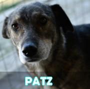 Association Remember Me France : sauver et adopter un chien roumain Patz12