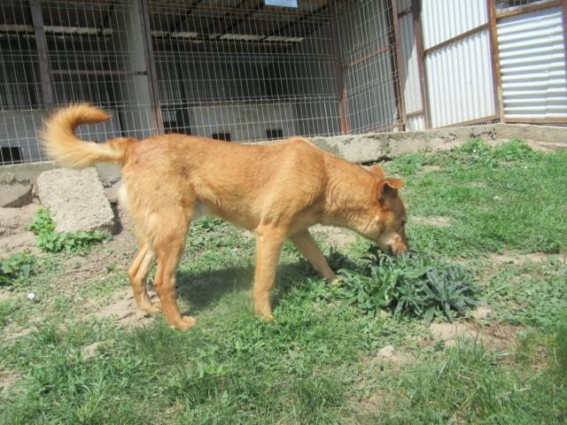 PEDRO - mâle croisé de taille moyenne, né en 2013 - REMEMBER ME LAND Pedro_12