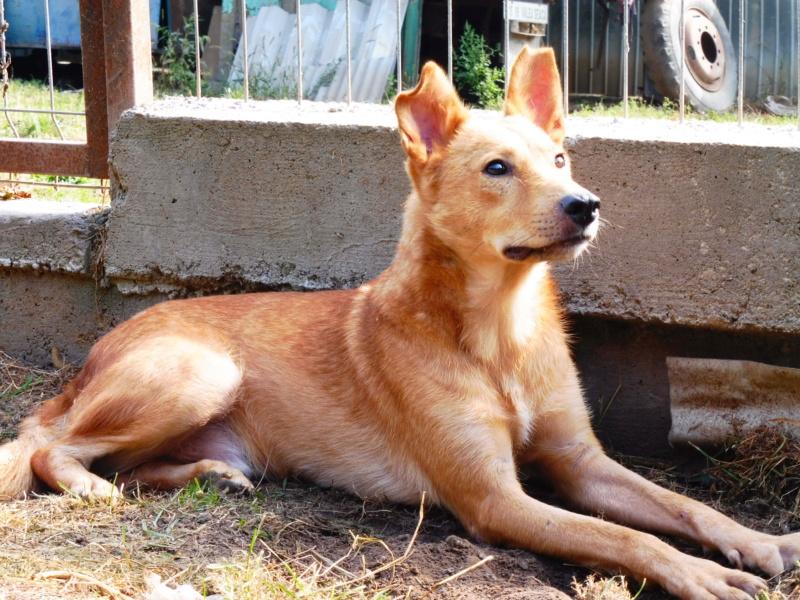 PEDRO - mâle croisé de taille moyenne, né en 2013 - REMEMBER ME LAND Pedro_18