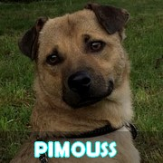 Association Remember Me France : sauver et adopter un chien roumain Pimous11