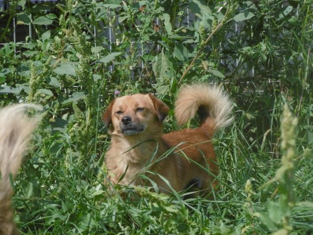 PINDER - mâle croisé de petite taille (8 kg) - né en 2013 - (PASCANI) - REMEMBER ME LAND  Pinder16