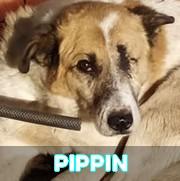 Les séniors en roumanie en un clin d'oeil Pippin21