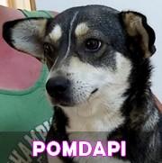 Les adultes de petite taille en Roumanie en un clin d'oeil Pomdap11