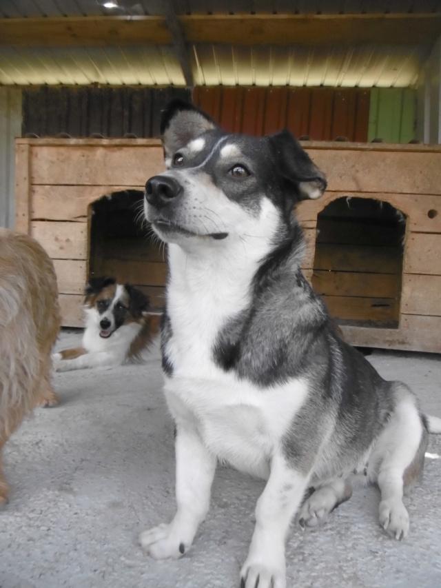 NINA (ex POMDAPI) - femelle de petite taille (12 kg) - née environ en mai 2015 - PASCANI - REMEMBER ME LAND - Adoptée par Gaelle (83) Pomdap15