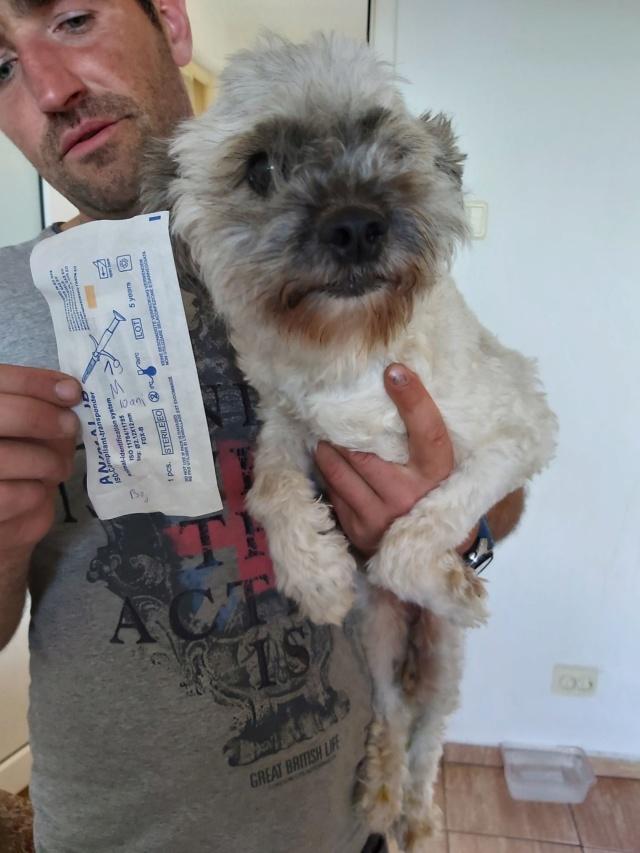 POPCORN - Magnifique mâle Shih tzu de petite taille - né environ en 2009 - En FA chez Florin - (Roumanie) Popcor13