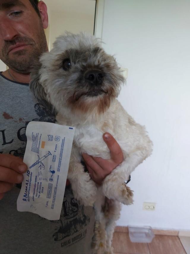 POPCORN - Magnifique mâle Shih tzu de petite taille - né environ en 2009 - En FA chez Florin - (Roumanie) Popcor14