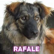 Les adultes de taille moyenne en Roumanie en un clin d'oeil Rafale27