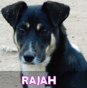 Les adultes de taille moyenne en Roumanie en un clin d'oeil Rajah13