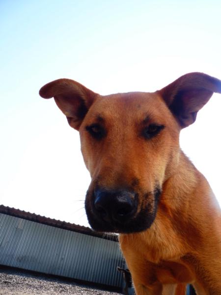 RAMBO - joli mâle croisé de taille moyenne, né en 2016. Très sociable (PASCANI) - REMEMBER ME LAND Rambo_21