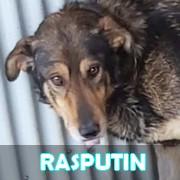 Les adultes de grande taille en Roumanie en un clin d'oeil Rasput17