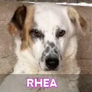 Les adultes de taille moyenne en Roumanie en un clin d'oeil Rhea12
