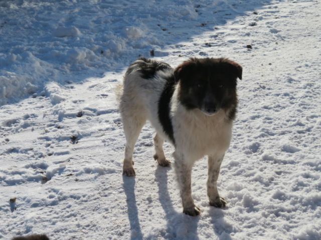 RICKO - mâle, de taille petite à moyenne, né décembre 2016 - REMEMBER ME LAND - Page 3 Ricko_50