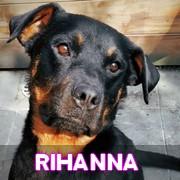 Association Remember Me France : sauver et adopter un chien roumain Rihann17