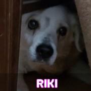 Les adultes de petite taille en Roumanie en un clin d'oeil Riki11