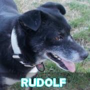 Association Remember Me France : sauver et adopter un chien roumain Rudolf11