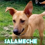 Association Remember Me France : sauver et adopter un chien roumain Salame19