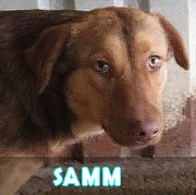 Les chiots en roumanie en un clin d'oeil  Samm11