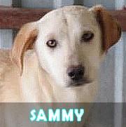 Les chiots en roumanie en un clin d'oeil  Sammy12