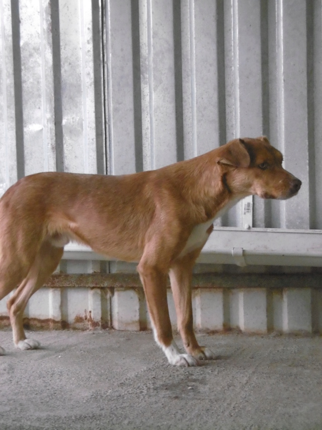 SANKUKA, mâle, croisé, né en 2014, taille moyenne 20kg - REMEMBER ME LAND - Page 2 Sankuk33