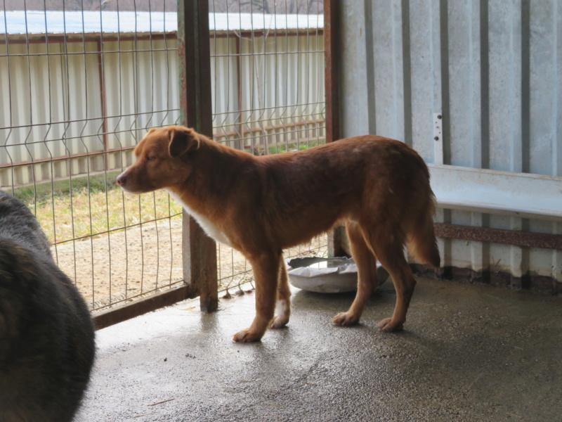 SANKUKA, mâle, croisé, né en 2014, de taille moyenne - REMEMBER ME LAND - Page 2 Sankuk43