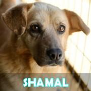 Les adultes de petite taille en Roumanie en un clin d'oeil Shamal22