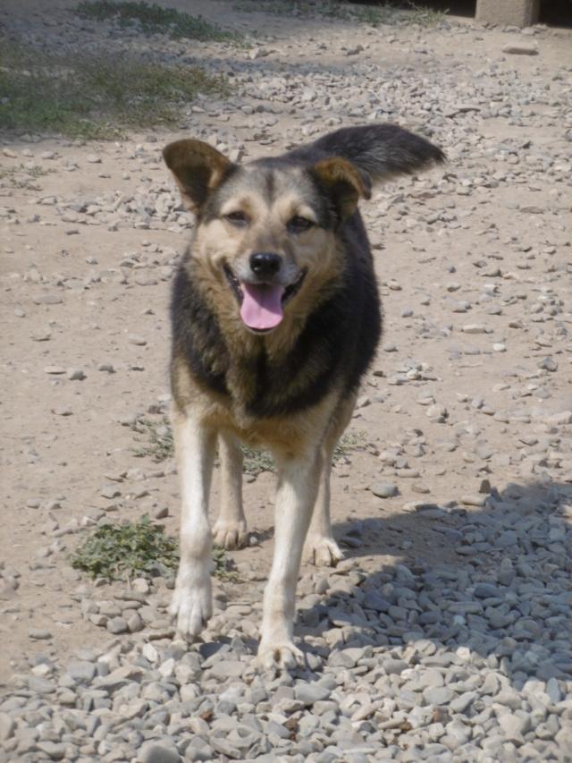 SHIRLEY - femelle croisée, de taille moyenne, née environ en 2011 (PASCANI) - REMEMBER ME LAND Shirle21