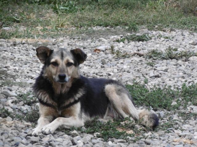 SHIRLEY - femelle croisée, de taille moyenne, née environ en 2011 (PASCANI) - REMEMBER ME LAND Shirle26