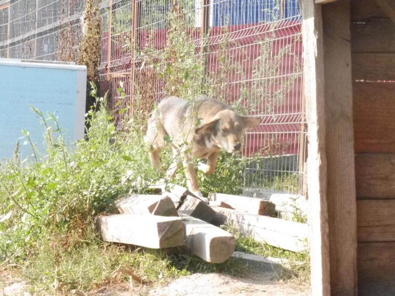 SIRTAKI - mâle croisé de grande taille, né en 2015 (PASCANI) - REMEMBER ME LAND Sirtak10