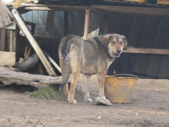 SIRTAKI - mâle croisé de grande taille, né en 2015 (PASCANI) - REMEMBER ME LAND - Page 2 Sirtak25