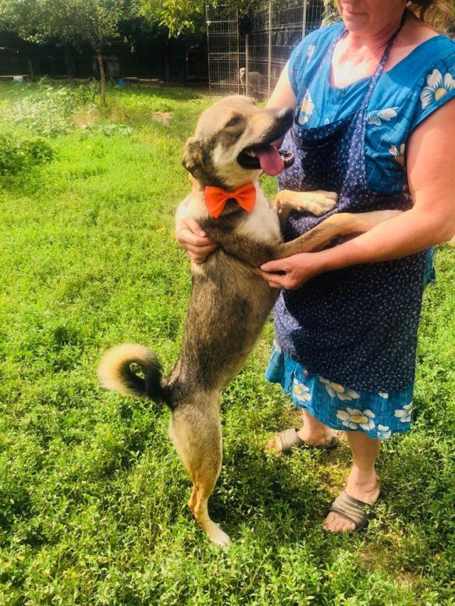 SKIPPO - femelle de taille moyenne, née en mai 2018 - CHEZ CARMINA A BUCAREST Skippo13