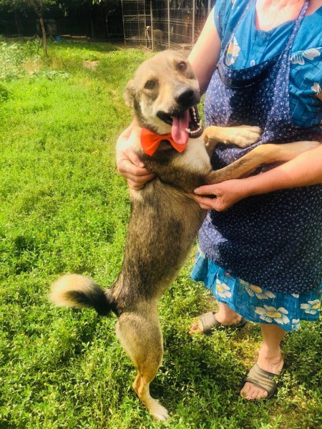 SKIPPO - femelle de taille moyenne, née en mai 2018 - CHEZ CARMINA A BUCAREST Skippo14