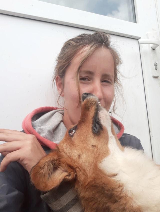 LOKI (ex SONIC) - petit mâle roux brachygnathe tapé par une voiture né en juin 2016 - REMEMBER ME LAND - Adopté par Aurore (27) Sonic210
