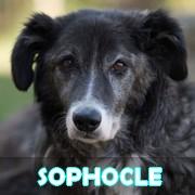 Association Remember Me France : sauver et adopter un chien roumain Sophoc15