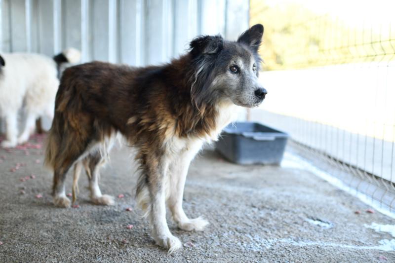 OLLY (ex STARSHIP) - mâle croisé Tervueren, âgé, de taille moyenne, né environ en avril 2008  (PASCANI) - REMEMBER ME LAND - Adopté par Maud (71) - Page 2 Starsh35