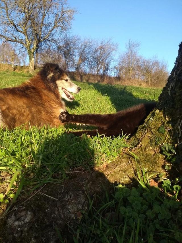 OLLY (ex STARSHIP) - mâle croisé Tervueren, âgé, de taille moyenne, né environ en avril 2008  (PASCANI) - REMEMBER ME LAND - Adopté par Maud (71) - Page 4 Starsh40