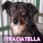 Les adultes de taille moyenne en Roumanie en un clin d'oeil Straci11