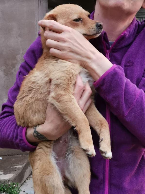 SYLVIA - femelle croisée de petite taille - 6 kg - Née en mai 2018- PASCANI -REMEMBER ME LAND - Adoptée par Christina (13)  Sylvia12
