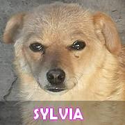 Les adultes de petite taille en Roumanie en un clin d'oeil Sylvia14