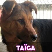 Les chiots en roumanie en un clin d'oeil  Taiga12
