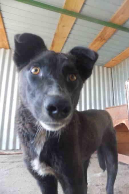 TASMANIAN - joli mâle croisé de taille moyenne, né avril 2017.  (PASCANI) - REMEMBER ME LAND Tasman12