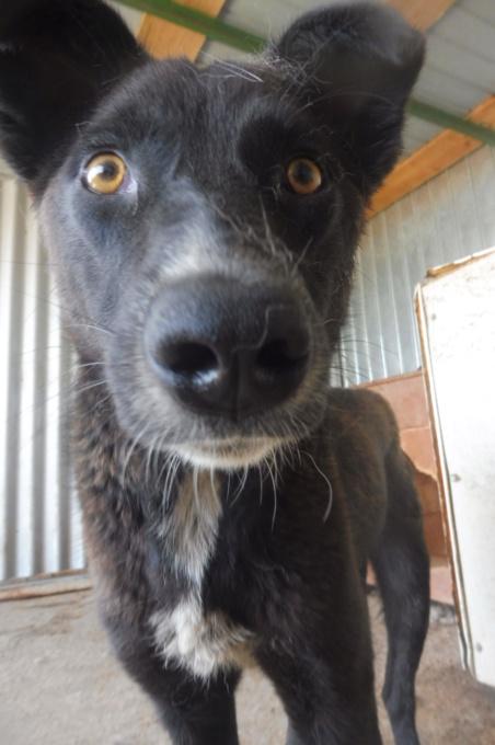 TASMANIAN - joli mâle croisé de taille moyenne, né avril 2017.  (PASCANI) - REMEMBER ME LAND Tasman13