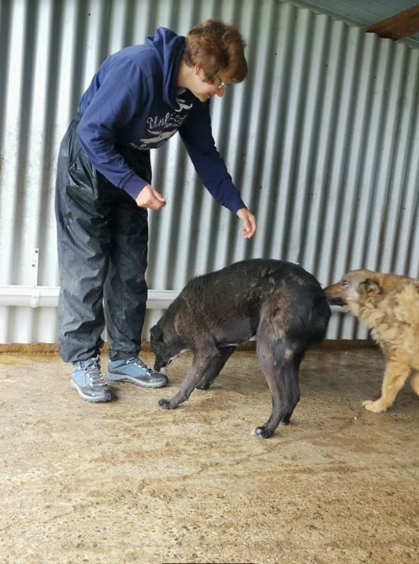 TASMANIAN - joli mâle croisé de taille moyenne, né avril 2017.  (PASCANI) - REMEMBER ME LAND Tasman32