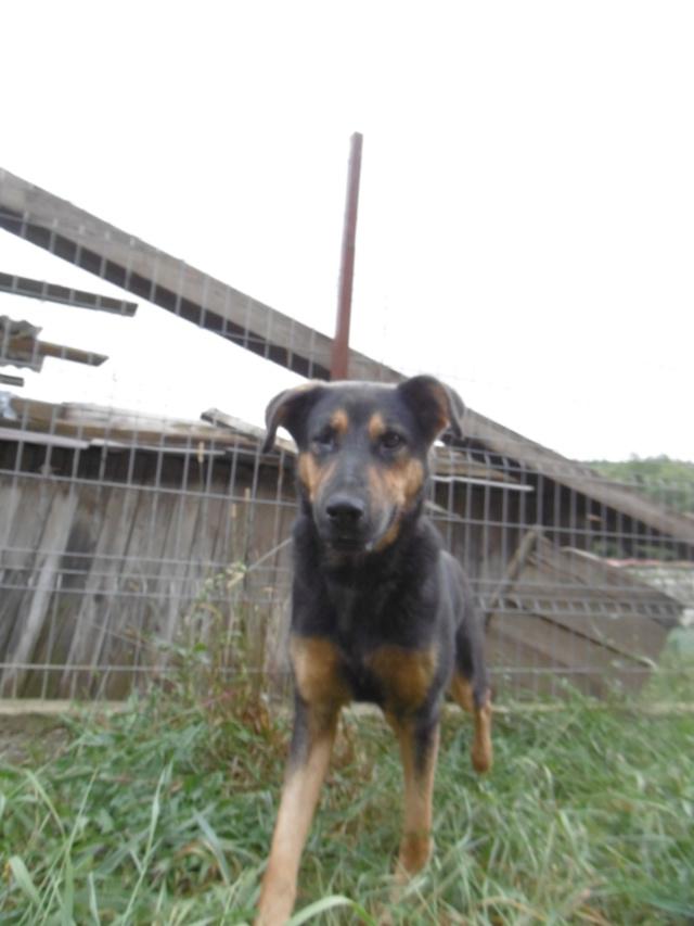TINA (ex THEA) - femelle croisée, borgne, de taille moyenne, née environ mai 2014 - REMEMBER ME LAND - ADOPTEE PAR MURIEL (28)  Thea_113