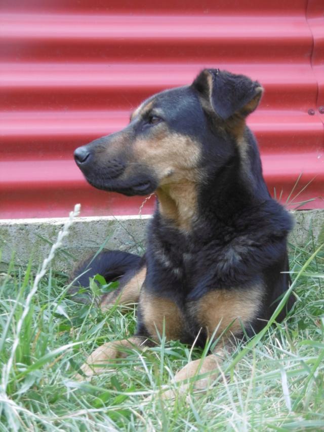 TINA (ex THEA) - femelle croisée, borgne, de taille moyenne, née environ mai 2014 - REMEMBER ME LAND - ADOPTEE PAR MURIEL (28)  Thea_511