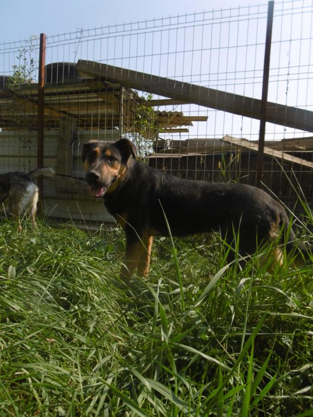 TINA (ex THEA) - femelle croisée, borgne, de taille moyenne, née environ mai 2014 - REMEMBER ME LAND - ADOPTEE PAR MURIEL (28)  Thea_810
