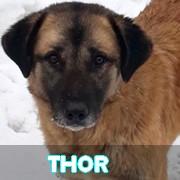Les adultes de grande taille en Roumanie en un clin d'oeil Thor10