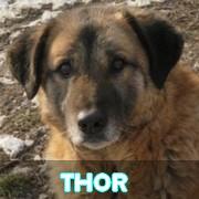Les adultes de grande taille en Roumanie en un clin d'oeil Thor12